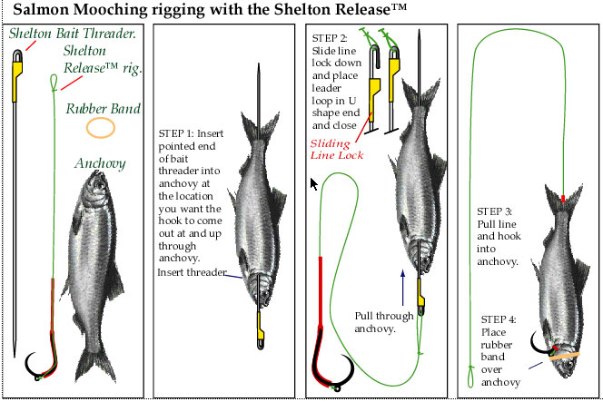 Picture of a how to rig an anchovy for salmon mooching