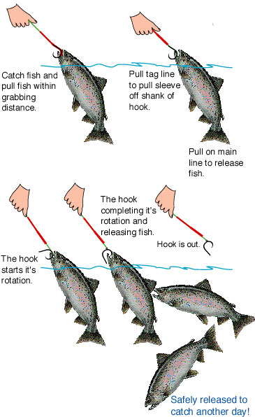 Picture of a typical salmon mooching circle hook rig
